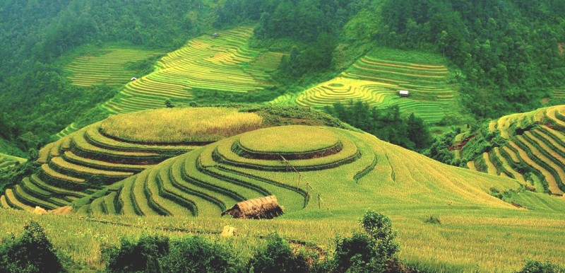 Riz_-mur_hagiang_vietnam