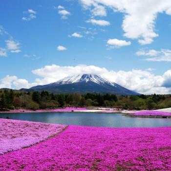 KHÁM PHÁ NHẬT BẢN: TOKYO – NÚI PHÚ SĨ – NAGOYA – KYOTO – OSAKA (6n5đ)