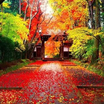 Mùa lá đỏ Hàn Quốc : SEOUL – NAMI – EVRLAND  ( 5N4Đ)