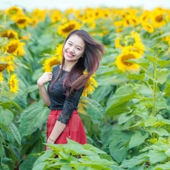 TOUR Nghệ An : Ngắm Hoa Hướng Dương – Thăm Quê Bác 2 Ngày 1 Đêm