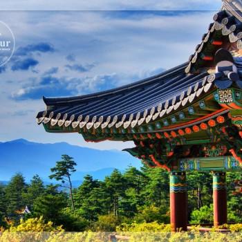 SEOUL – NAMI – EVERLAND – DRUMCAT SHOW ( 5n4d) Bay Jeju air