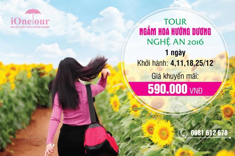 TOUR Ngắm hoa hướng dương nghệ an