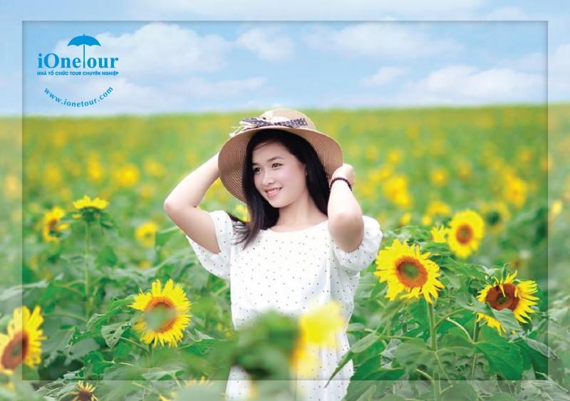 TOUR Ngắm Hoa Hướng Dương Nghệ An 1 Ngày