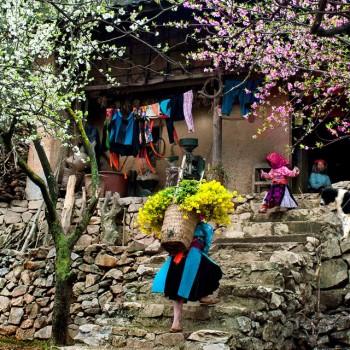 Du lịch Hà Giang – Mùa hoa đào nở hồng trên cao nguyên đá