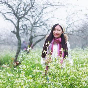 TOUR Mộc Châu Mùa Hoa 2 Ngày 1 Đêm ( Dịp tết dương lịch 2018 )