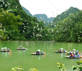 Du lịch Hoa Lư – Tam Cốc – Thung Nham 1 ngày