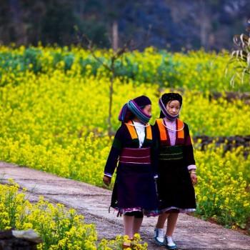Du Xuân Hà Giang 3 Ngày 2 Đêm